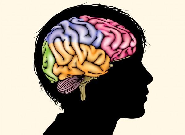 sn-brainstructureH