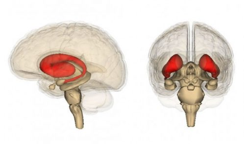Striatum-by-Life-Science-Databases-702x336