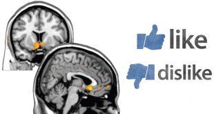 نقشه مغزی عزت نفس
