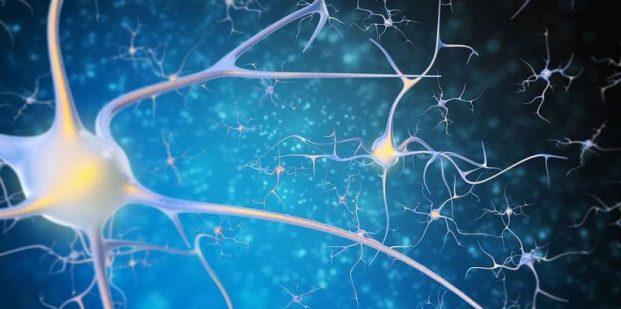 اتصالات عصبی