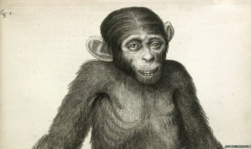 _83354881_chimpanzee-spl