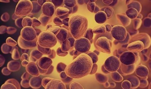 leukemia-cells