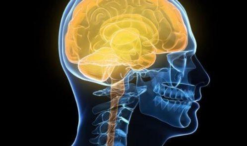 human-brain_3392751a-large-large_trans2oUEflmHZZHjcYuvN_Gr-bVmXC2g6irFbtWDjolSHWg-718x321