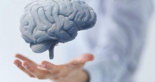دوره آموزشی مبانی علوم اعصاب و دانش مغز
