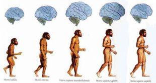 مغز انسان در حال کوچک شدن است